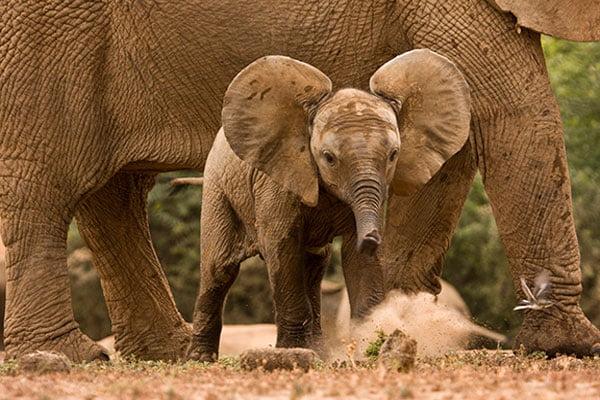 Addo Elephant Park Tours