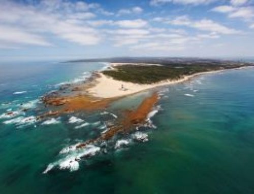 Cape Recife's Wild Side